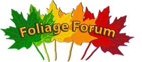 FoliageForum.com
